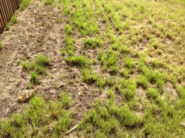 A Lawn In Need of Help