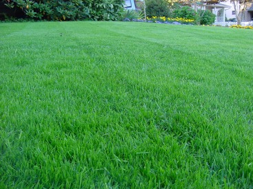 Plush Green Grass